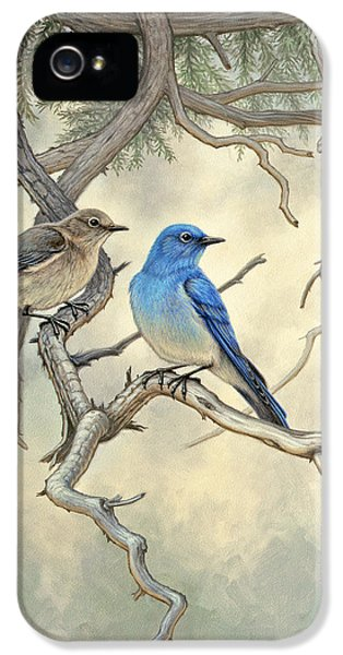Bluebird iPhone 5 Case - Under The Old Juniper-mountain Bluebirds by Paul Krapf