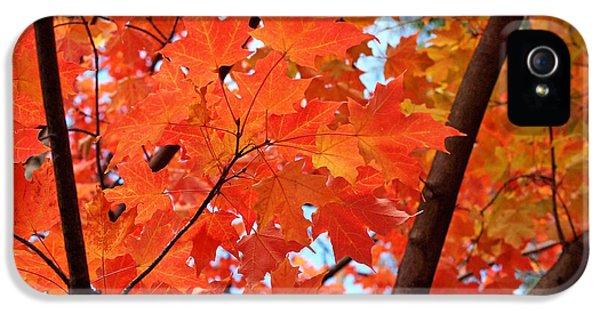 Under The Orange Maple Tree IPhone 5 Case by Rona Black