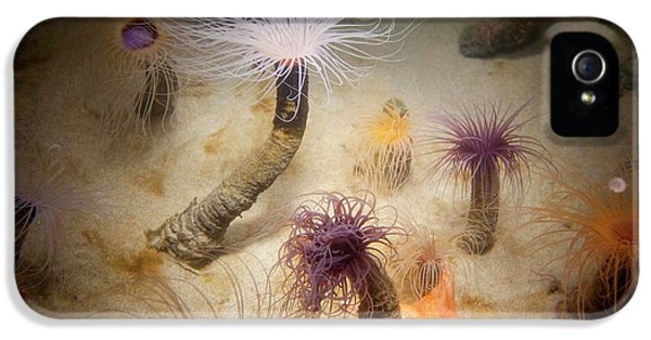 Undersea Life At Monterey IPhone 5 Case by Peter Menzel