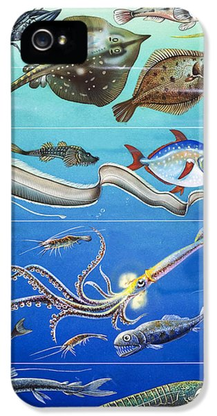 Underwater Creatures Montage IPhone 5 Case by English School