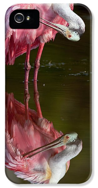 Usa, Florida, Everglades National Park IPhone 5 Case by Jaynes Gallery