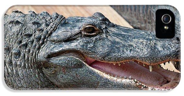 Usa, Florida Gatorland, Florida IPhone 5 Case