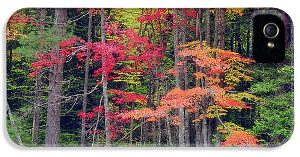 Usa, New York, Autumn In The Adirondack IPhone 5 Case by Jaynes Gallery