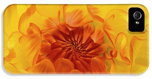 Usa, Oregon, Shore Acres Gardens IPhone 5 Case by Jaynes Gallery