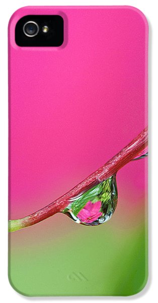 Usa, Oregon, Shore Acres IPhone 5 Case by Jaynes Gallery