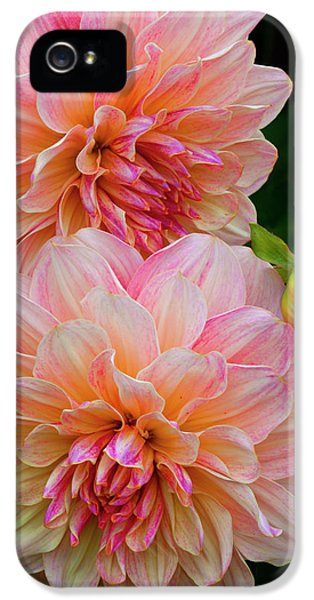 Usa, Oregon, Shore Acres State Park IPhone 5 Case by Jaynes Gallery