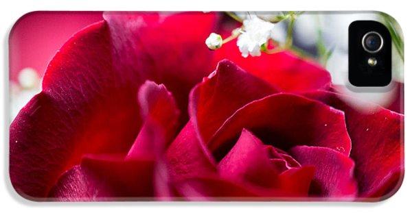 Valentine IPhone 5 Case by Alex Lapidus