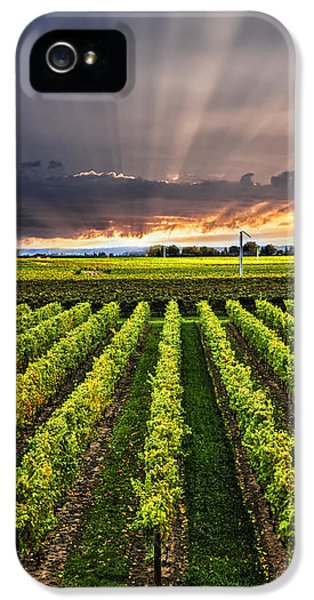 Vineyard At Sunset IPhone 5 Case by Elena Elisseeva