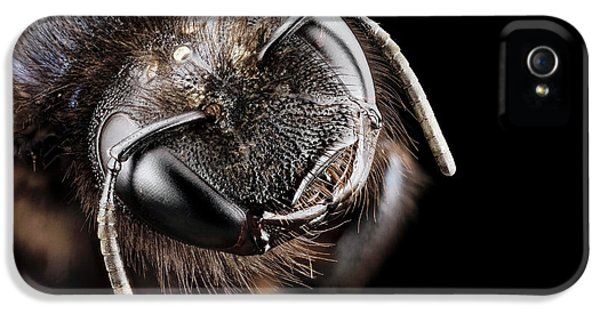 Violet Carpenter Bee IPhone 5 Case by Us Geological Survey