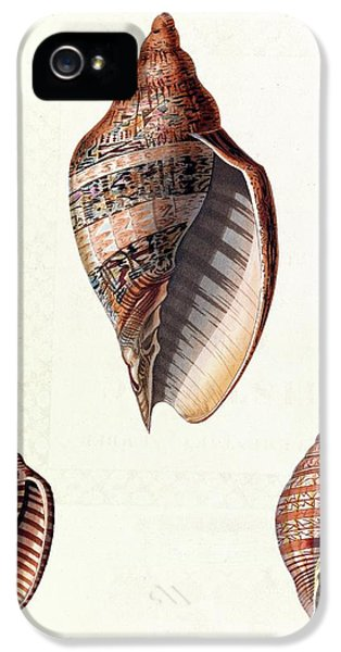 Voluta Seashells IPhone 5 Case by Royal Institution Of Great Britain