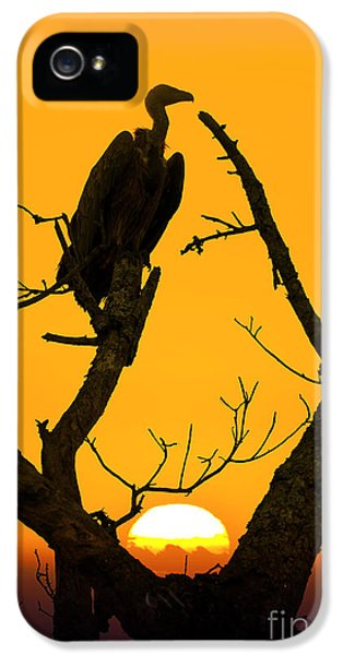Vulture iPhone 5 Case - Vulture by Delphimages Photo Creations