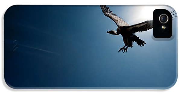 Vulture Flying In Front Of The Sun IPhone 5 Case by Johan Swanepoel