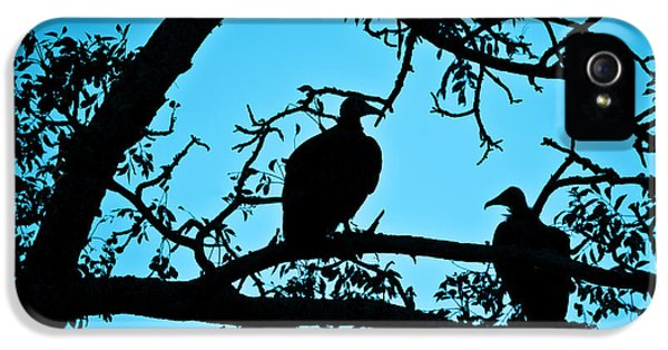 Vultures IPhone 5 Case by Delphimages Photo Creations