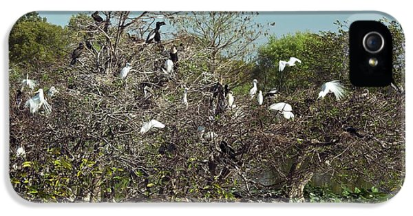 Wading Birds Roosting In A Tree IPhone 5 Case by Bob Gibbons