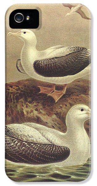 Wandering Albatross IPhone 5 Case by Rob Dreyer