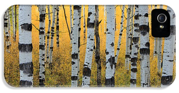 Wasatch Aspens IPhone 5 Case by Johnny Adolphson