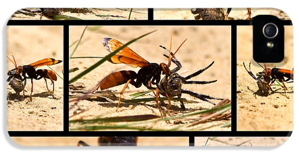 IPhone 5 Case featuring the photograph Wasp And His Kill by Miroslava Jurcik