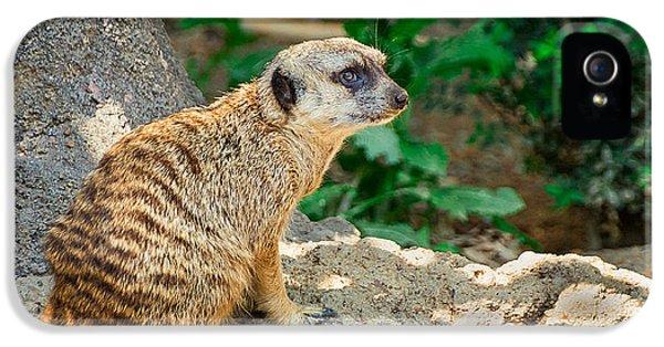 Watchful Meerkat IPhone 5 / 5s Case by Jon Woodhams