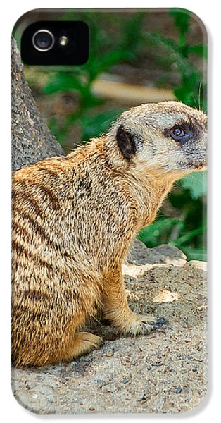 Watchful Meerkat Vertical IPhone 5 Case by Jon Woodhams