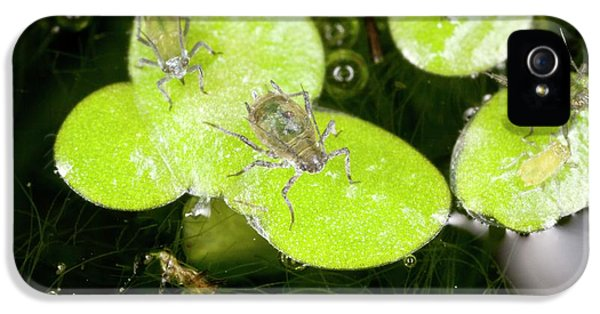 Water-lily Aphids On Duckweed IPhone 5 Case by Bob Gibbons