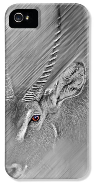 Waterbuck IPhone 5 Case