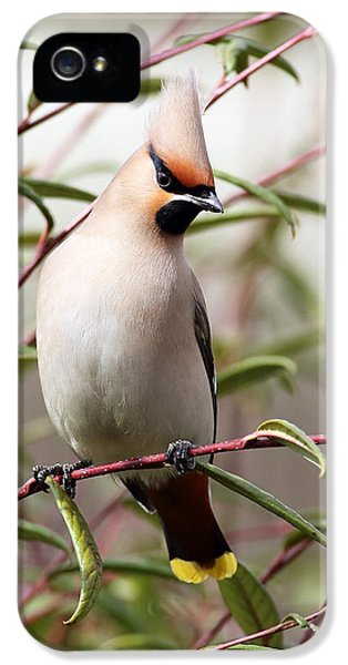 Waxwing IPhone 5 Case by Grant Glendinning
