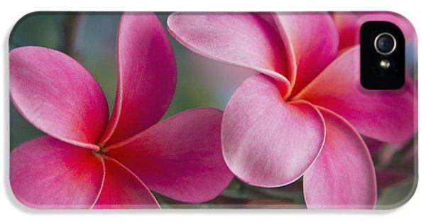 Plumeria Flower iPhone 5 Case - We Were Together . . .  by Sharon Mau