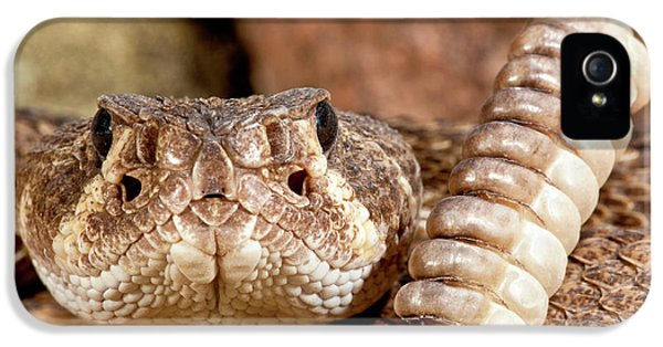 Western Diamondback Rattlesnake IPhone 5 Case by David Northcott
