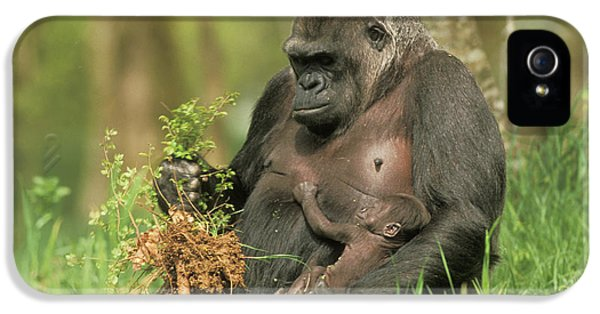 Western Gorilla And Young IPhone 5 Case by M. Watson