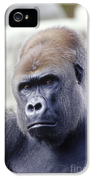 Western Lowland Gorilla IPhone 5 Case by Gregory G. Dimijian