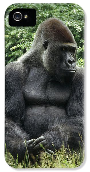 Western Lowland Gorilla Male IPhone 5 Case by Konrad Wothe