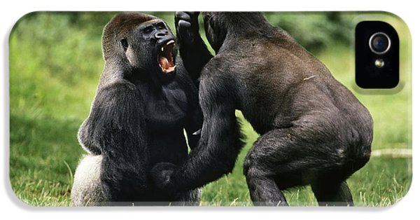 Western Lowland Gorilla Males Fighting IPhone 5 Case by Konrad Wothe