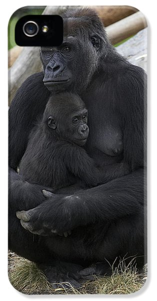Western Lowland Gorilla Mother And Baby IPhone 5 Case by San Diego Zoo