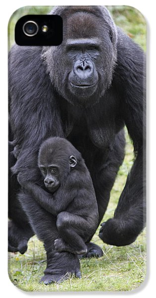 Western Lowland Gorilla Walking IPhone 5 Case by Duncan Usher