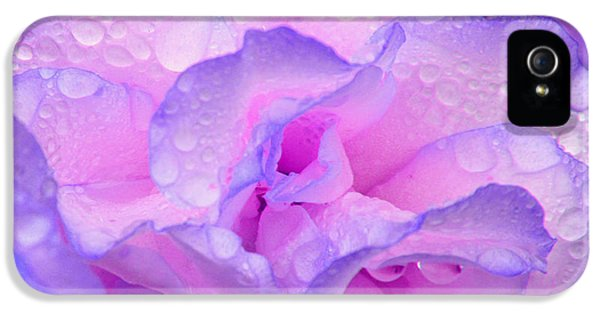 IPhone 5 Case featuring the photograph Wet Rose In Pink And Violet by Nareeta Martin