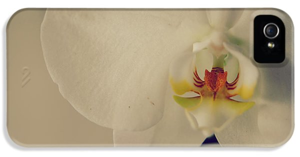 Orchid iPhone 5 Case - What Love Felt Like by Laurie Search