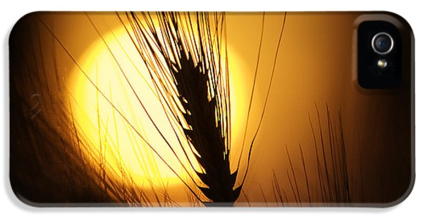Wheat At Sunset  IPhone 5 Case by Tim Gainey