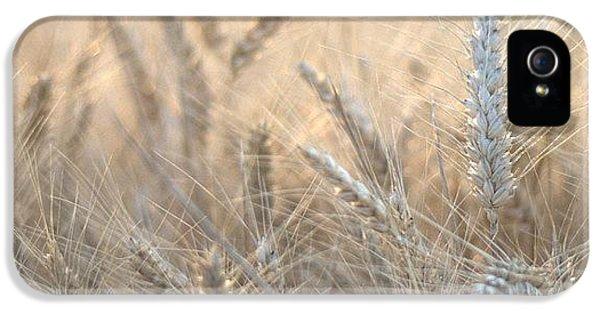 Beautiful iPhone 5 Case - #wheat #france #rsa_ladies #rsa_nature by Georgia Fowler