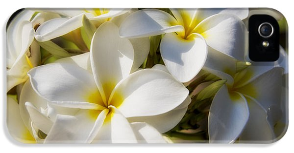 White And Yellow Plumeria 2 IPhone 5 Case