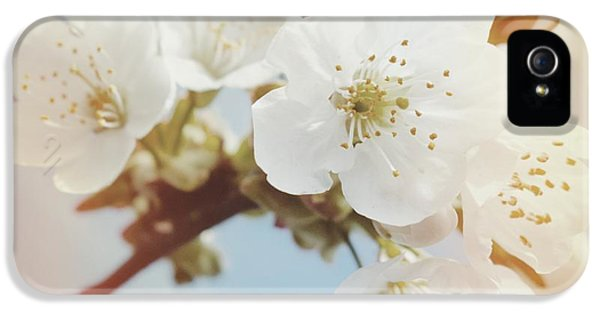 Orange iPhone 5 Case - White Apple Blossom In Spring by Matthias Hauser