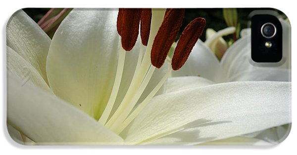 White Asiatic Lily IPhone 5 Case