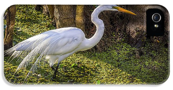 White Egret On The Hunt IPhone 5 Case