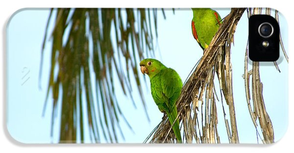White-eyed Parakeets, Brazil IPhone 5 / 5s Case by Gregory G. Dimijian, M.D.