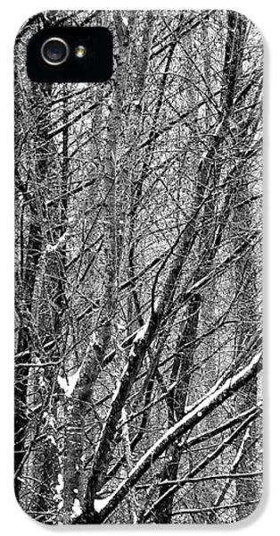 IPhone 5 Case featuring the photograph White Forest by Marc Philippe Joly