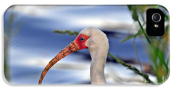 Intriguing Ibis IPhone 5 Case by Al Powell Photography USA