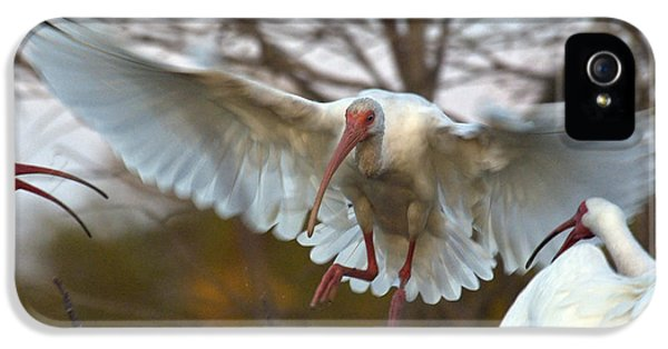 White Ibis IPhone 5 Case by Mark Newman