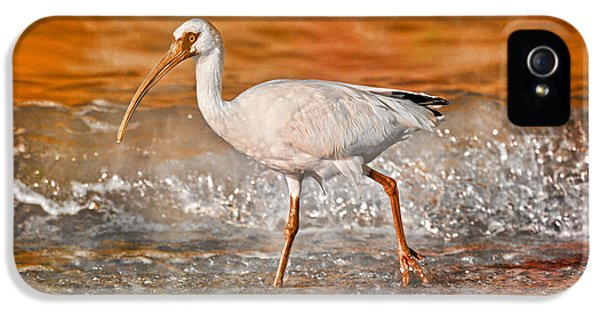 Ibis iPhone 5 Case - White Ibis Stroll by Betsy Knapp