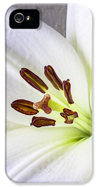 Stamens iPhone 5 Case - White Lily Close Up by Garry Gay