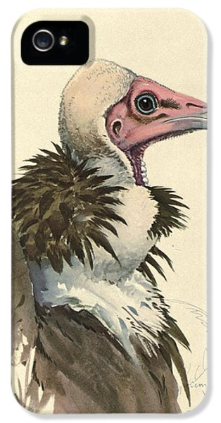 Vulture iPhone 5 Case - White Necked Vulture by Dreyer Wildlife Print Collections