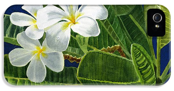 White Plumeria Flowers With Blue Background IPhone 5 Case by Sharon Freeman